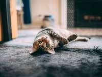 gatto soriano marrone sdraiato sul tessuto grigio