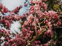 ροζ λουλούδια σε κλαδί δέντρου καφέ