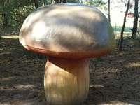 Parco dei funghi a Piłka