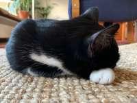 Cat named Mimi