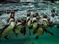2 pinguins na água durante o dia