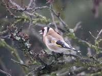 żółty czarno-biały ptak na gałęzi drzewa