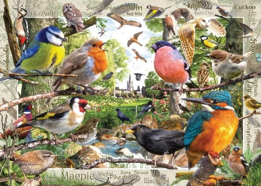 verschillende kleine vogels - m (12×9)