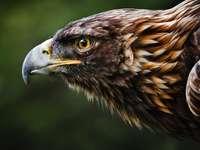 златен орел