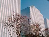 copac gol lângă clădirea albă