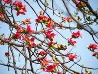 czerwony i żółty kwiat na gałęzi drzewa brązowy