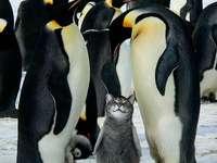 Koto-pingüino.