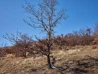 bezlistý strom na poli hnědé trávy pod modrou oblohou