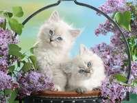 gatitos en lilas