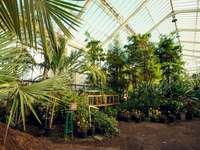 zelené rostliny na zelený kovový rám