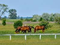 Horses in the Hungary National Park