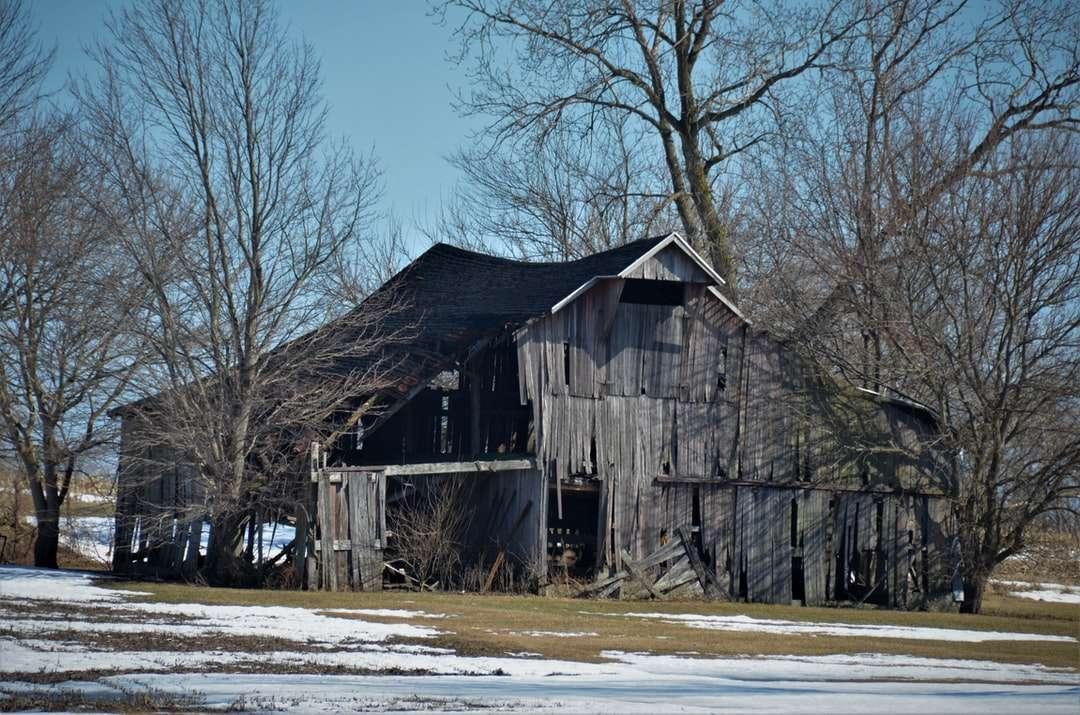 barna faház napközben csupasz fák közelében - Régi kifakult összeomló fapajta (9×6)