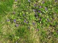 violetas violetas violetas