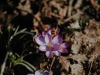 purple flower on brown soil