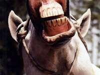 Tüsszögő ló