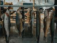 stříbrná ryba na šedém ocelovém stojanu na ryby