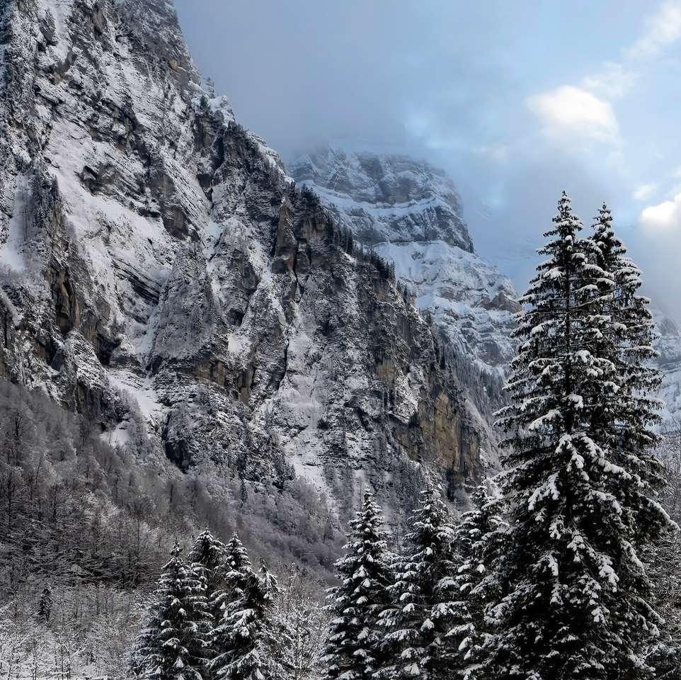 groene pijnbomen dichtbij grijze berg onder blauwe hemel - groene pijnbomen dichtbij grijze berg onder blauwe hemel overdag. Zo indrukwekkend!. Klöntalersee, Glaris, Suiza (16×16)