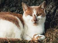 o gato vermelho assustado