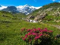 Alplandskap