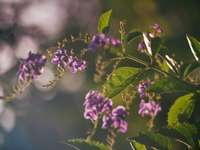 fialový květ v sklopném objektivu
