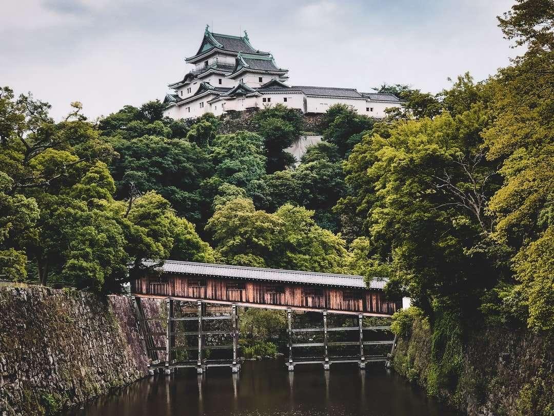 white and black house near green trees and river - Wakayama castle . Wakayama, Japan (16×12)