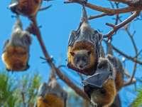 barna és szürke mókus nappali barna faágon