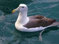 λευκό και καφέ πουλί στο νερό
