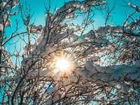 bílý a hnědý strom pod modrou oblohou během dne