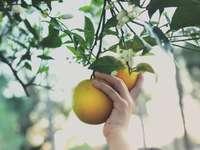 persoon die geel rond fruit houdt