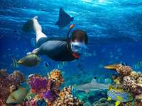 fish, diver - coral reef in Egypt