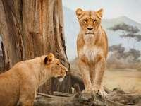 ζώα στην Κένυα
