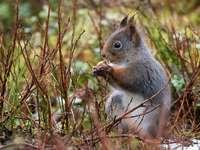 Écureuil gris sur l'herbe brune pendant la journée