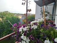 Blomma balkonger
