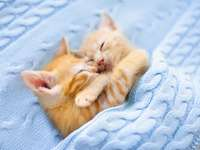 Gatinhos abraços doces