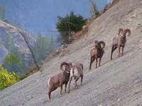 Nationaal park Kootenay