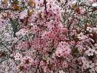 Wiosna nadeszła