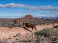 bruine koe op bruin veld onder de blauwe hemel overdag