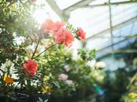 flori roz cu frunze verzi