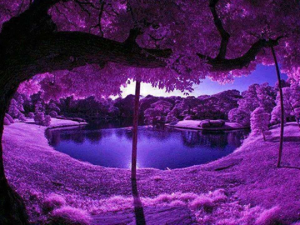 Krásná zahrada v japonském Kjótu - prostě nádherná příroda kjóto japonsko (20×15)