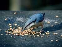 modrý a bílý pták na hnědých a černých oblázcích