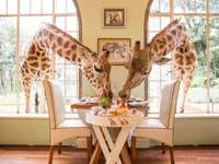 giraffes for breakfast in kenya