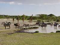 animals at a waterhole