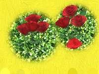Περίληψη τριαντάφυλλα