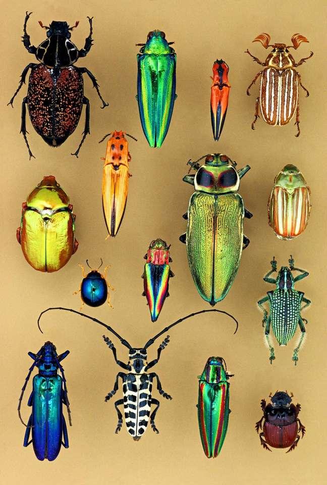 Coleoptera - Това, група и най-разнообразна сред насекомите, около три хиляди вида, вече описани от науките (4×6)
