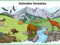 Animale terestre
