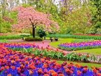 Garten in Tulpen