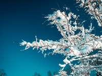 weißer Kirschblütenbaum während des Tages