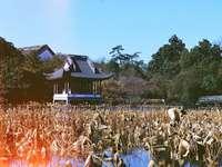 casa marrone e bianca vicino a alberi verdi sotto il cielo blu