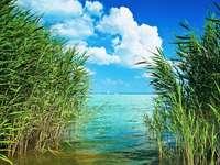 Reed al Lago Balaton Ungheria