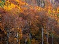 Herfst bos in Hongarije